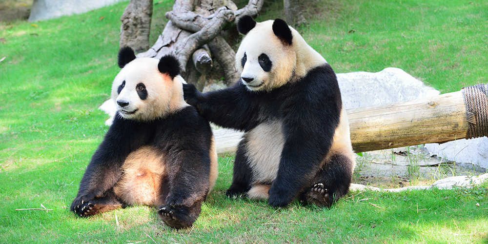 panda-zoo