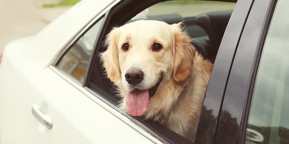 pet-in-car